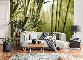 3D Фотообои «Бамбук» вид 7