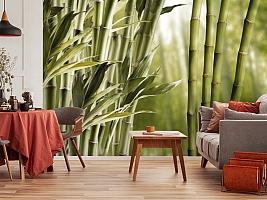 3D Фотообои «Бамбук» вид 5