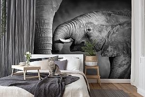 3D Фотообои  «Слоны»  вид 7