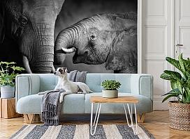 3D Фотообои  «Слоны»  вид 2