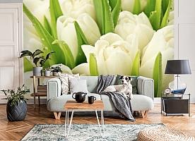 3D Фотообои «Белые тюльпаны» вид 8