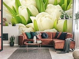 3D Фотообои «Белые тюльпаны»