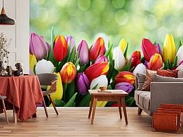3D Фотообои «Разноцветные тюльпаны» вид 5