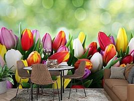 3D Фотообои «Разноцветные тюльпаны» вид 2