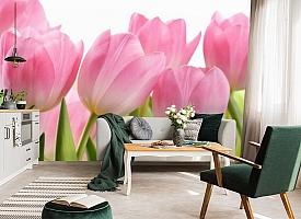 3D Фотообои «Крупные розовые тюльпаны» вид 7