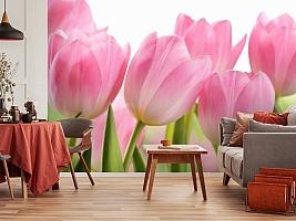 3D Фотообои «Крупные розовые тюльпаны» вид 5