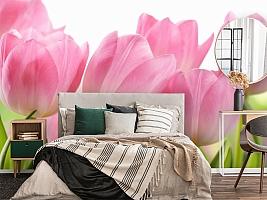 3D Фотообои «Крупные розовые тюльпаны» вид 4