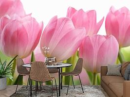 3D Фотообои «Крупные розовые тюльпаны» вид 2