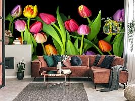3D Фотообои «Тюльпаны на темном фоне» вид 3