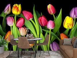 3D Фотообои «Тюльпаны на темном фоне» вид 2