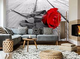 3D Фотообои «Черно белое фото с красной розой» вид 5
