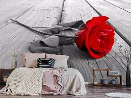 3D Фотообои «Черно белое фото с красной розой» вид 3