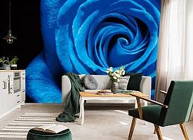 3D Фотообои  «Синяя роза» вид 7
