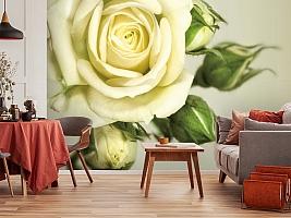 3D Фотообои  «Бежевая роза»  вид 5