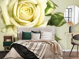 3D Фотообои  «Бежевая роза»  вид 4