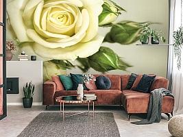 3D Фотообои  «Бежевая роза»  вид 3