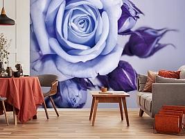3D Фотообои  «Сиреневая роза»  вид 5