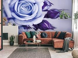 3D Фотообои  «Сиреневая роза»  вид 3