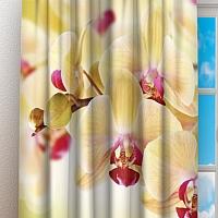 Фотошторы «Желтая орхидея» вид 3