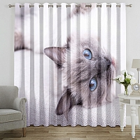 Фотошторы «Голубоглазая кошка» вид 7
