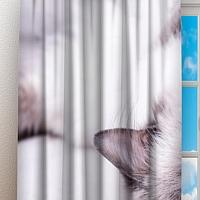 Фотошторы «Голубоглазая кошка» вид 3