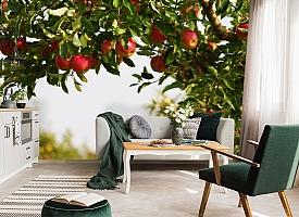 3D Фотообои  «Яблоки»  вид 7