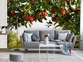 3D Фотообои  «Яблоки»  вид 3