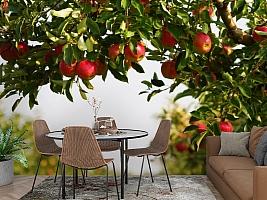 3D Фотообои  «Яблоки»  вид 2
