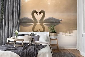 3D Фотообои «Влюбленные лебеди» вид 7