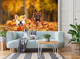 3D Фотообои  «Собаки в листьях»  вид 2