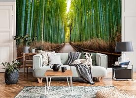 3D Фотообои «Бамбуковый лес»