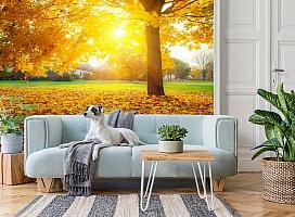 3D Фотообои  «Осенний парк»  вид 2