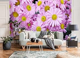 3D Фотообои  «Хризантемы»  вид 8