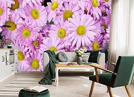 3D Фотообои  «Хризантемы»  вид 7
