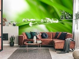 3D Фотообои  «Трава с росой»  вид 3