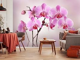 3D Фотообои «Розовая орхидея над водой»