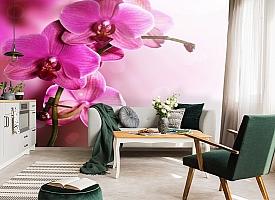 3D Фотообои «Розовая орхидея на нежном фоне» вид 7