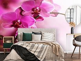 3D Фотообои «Розовая орхидея на нежном фоне» вид 4