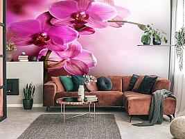 3D Фотообои «Розовая орхидея на нежном фоне» вид 3