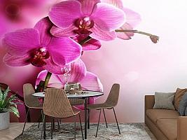 3D Фотообои «Розовая орхидея на нежном фоне» вид 2