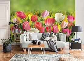 3D Фотообои  «Тюльпаны с каплями росы»  вид 8
