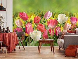 3D Фотообои  «Тюльпаны с каплями росы»  вид 5