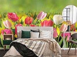 3D Фотообои  «Тюльпаны с каплями росы»  вид 4
