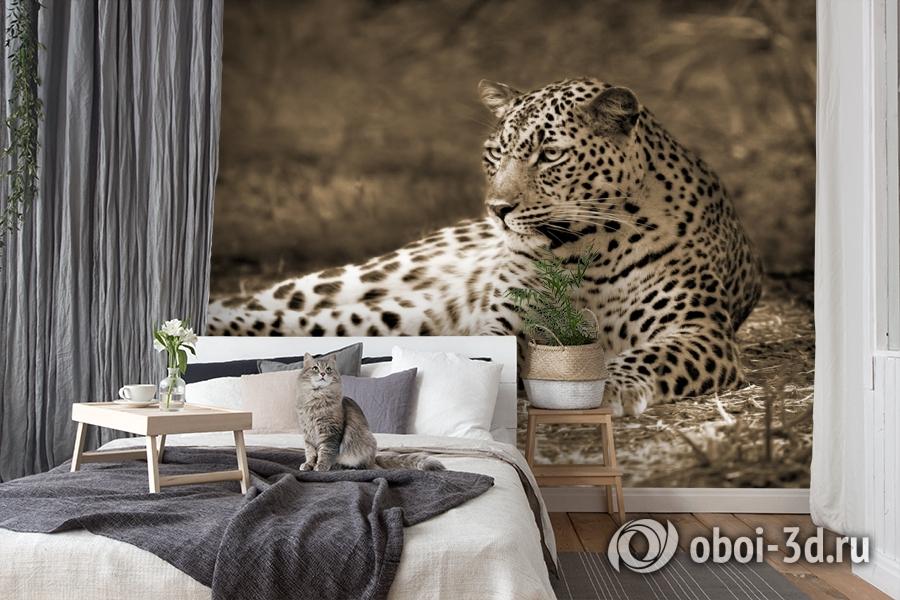 3D Фотообои «Леопард сепия» вид 7