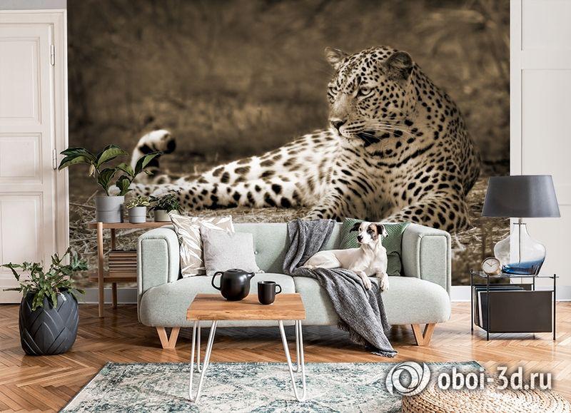 3D Фотообои «Леопард сепия» вид 6