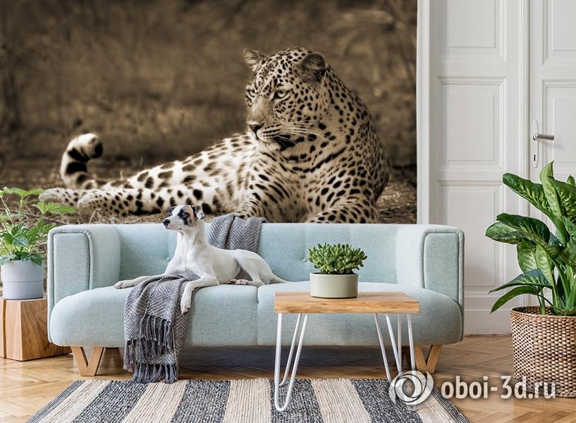 3D Фотообои «Леопард сепия» вид 2