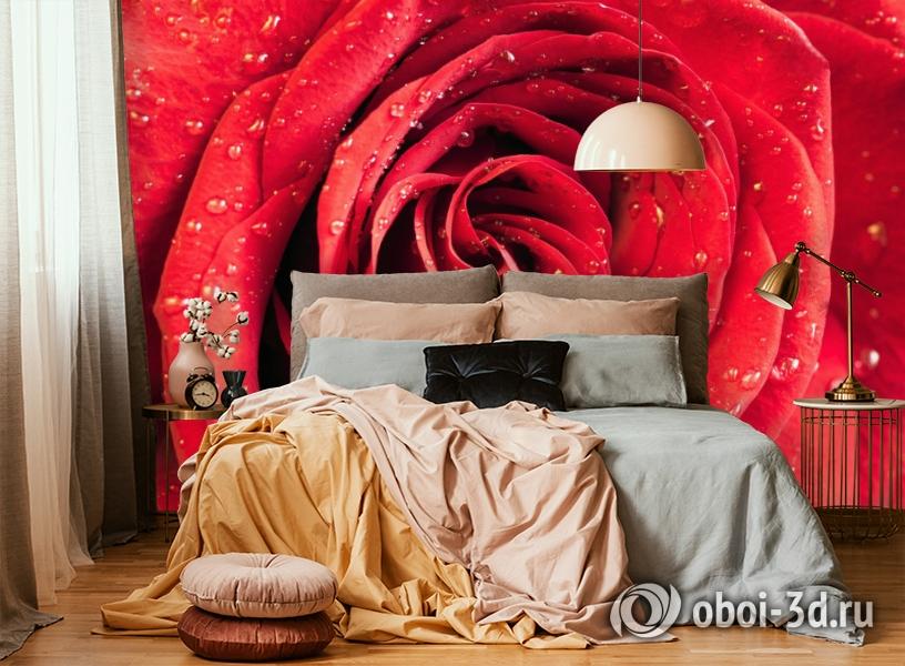 3D Фотообои «Красная роза» вид 6