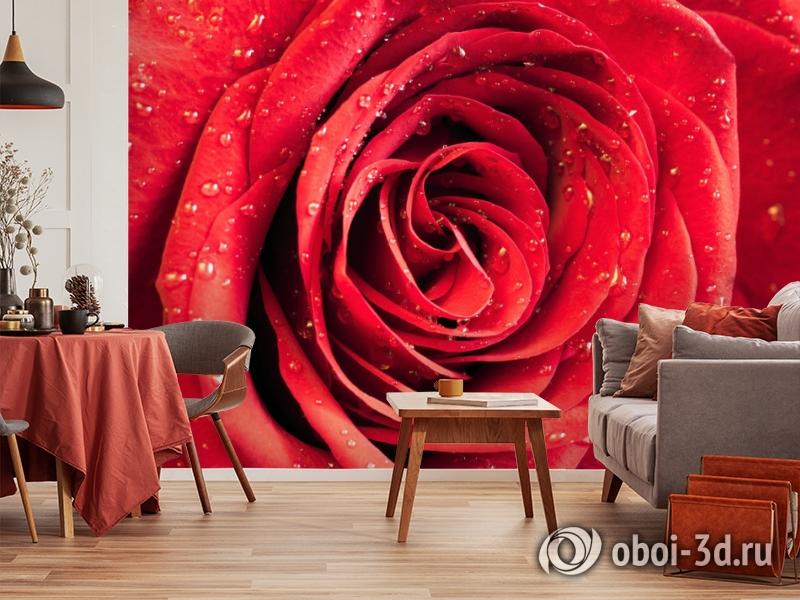 3D Фотообои «Красная роза» вид 5