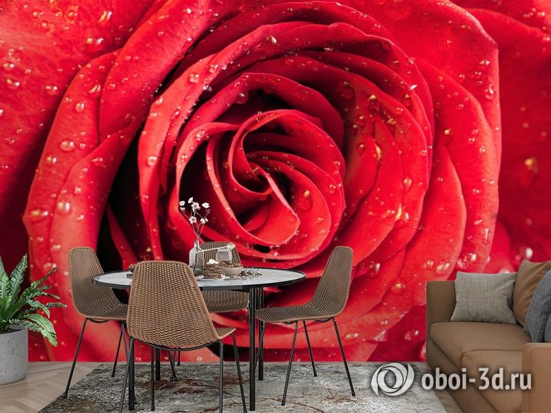 3D Фотообои «Красная роза» вид 2