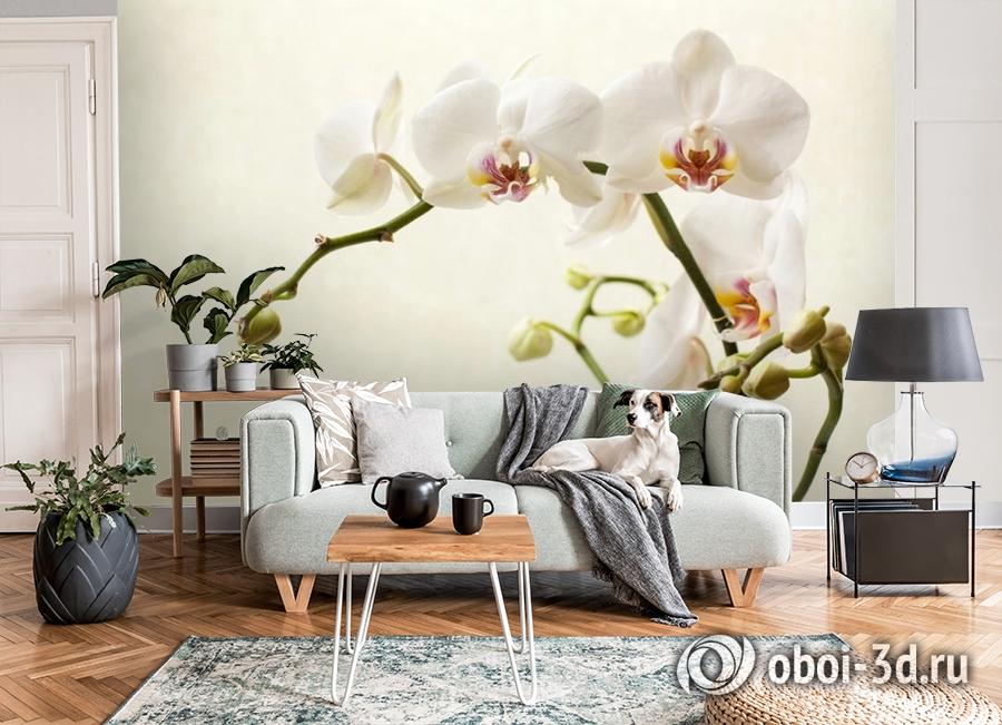 3D Фотообои «Белая орхидея» вид 8